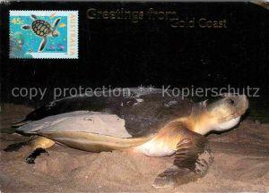 72629985 Schildkroeten Flatback Turtle Gold Coast Australia Tiere Schildkr?ten