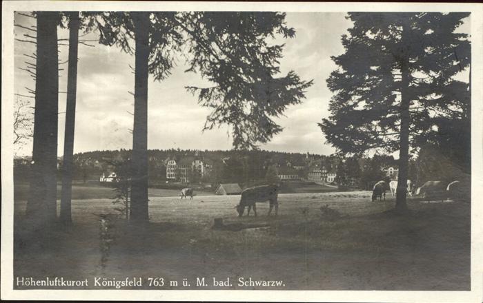AK / Ansichtskarte Koenigsfeld Schwarzwald Kuehe / Koenigsfeld im Schwarzwald /Schwarzwald-Baar-Kreis LKR