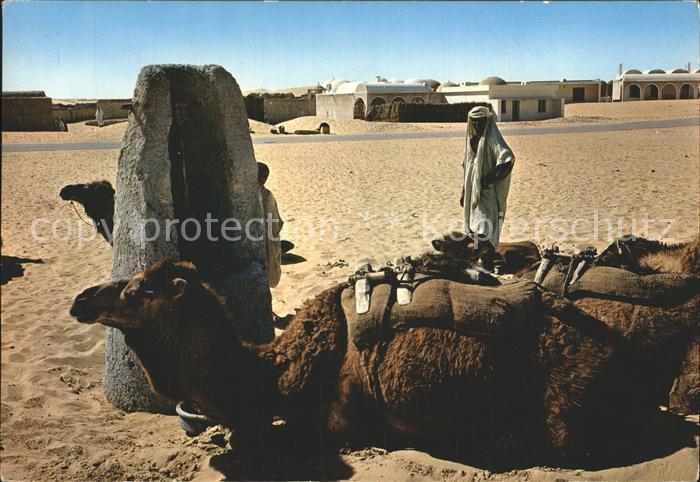 AK / Ansichtskarte Timimoun Mann mit Kamelen