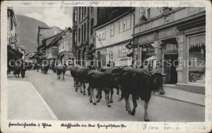AK / Ansichtskarte Friedrichroda Viehtrieb durch die Stadt / Friedrichroda /Gotha LKR