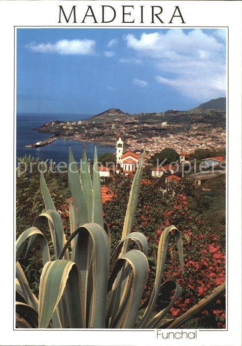 AK / Ansichtskarte Funchal Panorama Kuestenstadt Kaktus Kat. Funchal 0