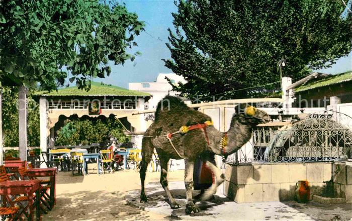 AK / Ansichtskarte La Marsa Cafe du Saf Saf Kat. Tunesien