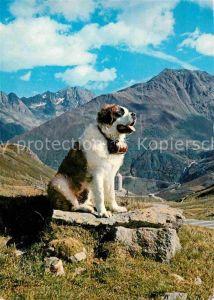 AK / Ansichtskarte Bernhardiner  Kat. Tiere