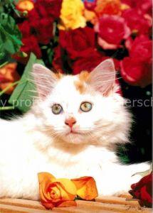 AK / Ansichtskarte Katzen Rosen  Kat. Tiere