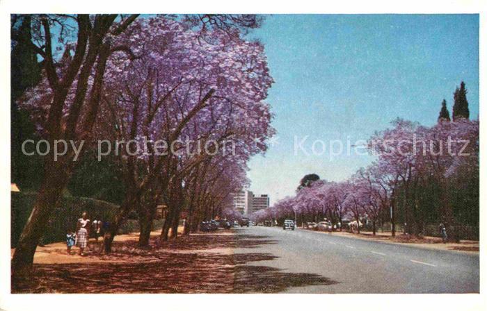 AK / Ansichtskarte Harare Jacaranda Trees Rhodesia Kat. Harare
