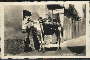 Esel Ticinese Packesel Schweiz /  /