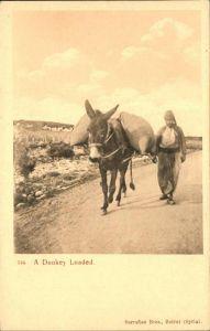 Esel Donkey Loaded Kat. Tiere