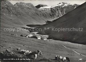 Avers mit Piz Turba Oberhalbsteiner Alpen Schafherde Kat. Juf
