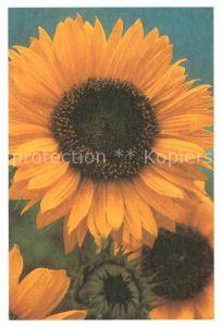 AK / Ansichtskarte Blumen Sonnenblume Foto Willemse  Kat. Pflanzen