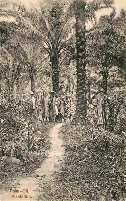 AK / Ansichtskarte Ghana Palm Oil Plantation Kat. Ghana