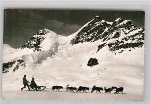 AK / Ansichtskarte Jungfraujoch Polarhunde Jungfrau Kat. Jungfrau
