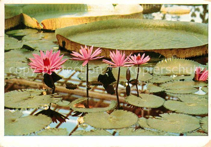 AK / Ansichtskarte Blumen Botanischer Garten Muenchen Tropische ...