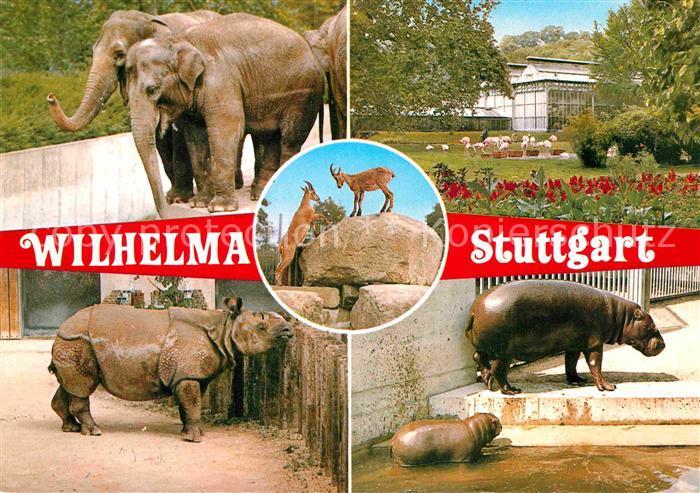 ak ansichtskarte zoo tierpark wilhelma stuttgart elefanten nilpferde nashorn kat tiere nr. Black Bedroom Furniture Sets. Home Design Ideas
