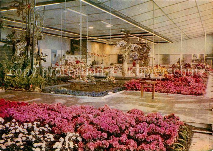 AK / Ansichtskarte Erfurt Internationale Gartenbauausstellung Blumen Zierpflanzenbau Kat. Erfurt