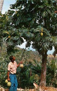 AK / Ansichtskarte Martinique Arbre a pain et ses fruits Kat. Martinique
