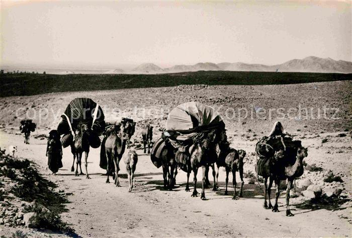 AK / Ansichtskarte Kamele Famille nomade en transhumance  Kat. Tiere