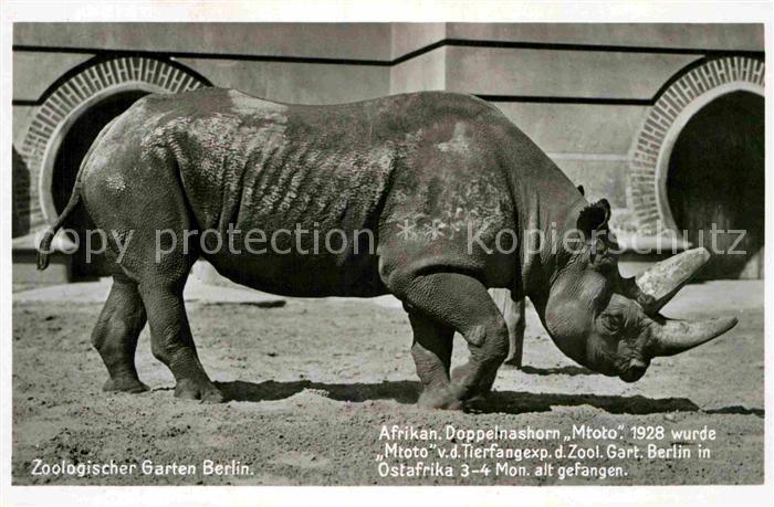AK / Ansichtskarte Nashorn Afrikanischer Doppelnashorn Mtoto Zoo Berlin  Kat. Tiere