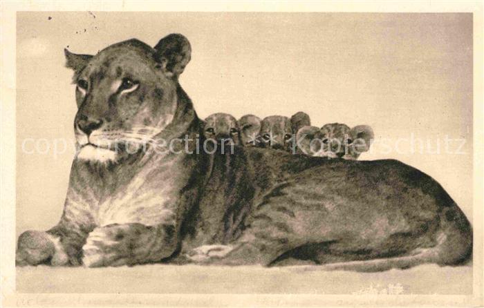 AK / Ansichtskarte Loewe Loewin mit Jungen Zoo Berlin  Kat. Tiere