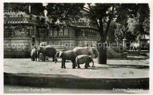 AK / Ansichtskarte Zoo Berlin Elefanten Freianlage  Kat. Tiere