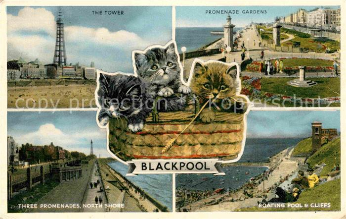 AK / Ansichtskarte Blackpool The Tower Promenade Gardens Three Promenades North Shore Boating Pool and Cliffs Cats Kat. Blackpool