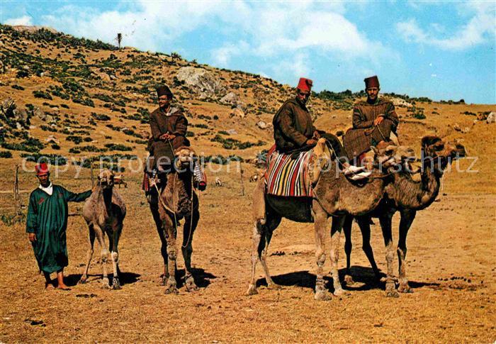 AK / Ansichtskarte Marokko Maroc Camelleros Kat. Marokko