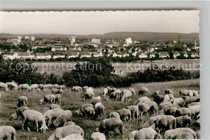 AK / Ansichtskarte Giessen Lahn Schafherde Blick zur Stadt Kat. Giessen