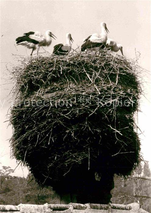 AK / Ansichtskarte Storch Nidda Storchennest Kat. Tiere