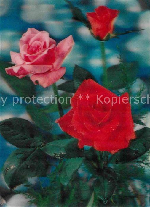 AK / Ansichtskarte Rosen 3D Karte  Kat. Pflanzen