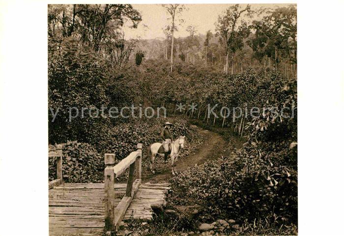 AK / Ansichtskarte Amsterdam Niederlande Tropenmuseum Kinatuin in Tjibeurum West Java ca 1870 Kat. Amsterdam