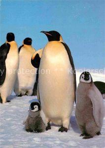 AK / Ansichtskarte Pinguin Kaiser Pinguin mit Jungen  Kat. Tiere
