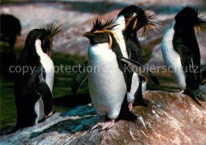 AK / Ansichtskarte Pinguin Felsenpinguine Zoo Berlin  Kat. Tiere