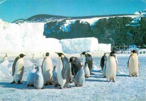 AK / Ansichtskarte Pinguin Kaiserpinguin Antarktis Kat. Tiere