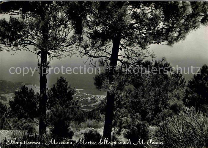 AK / Ansichtskarte Marciana Marina Marina dalla pineta di Monte Perone