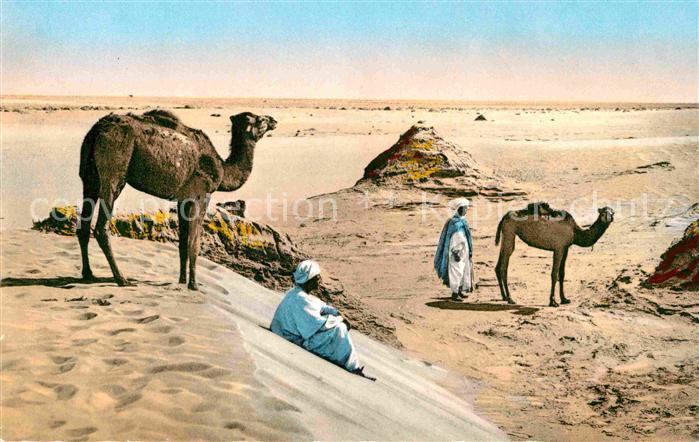 AK / Ansichtskarte Kamele Paysage saharien au Desert Kat. Tiere