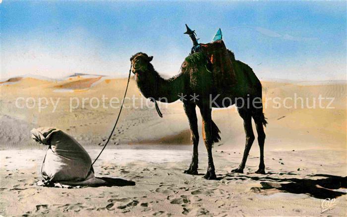 AK / Ansichtskarte Kamele Priere au Desert Kat. Tiere