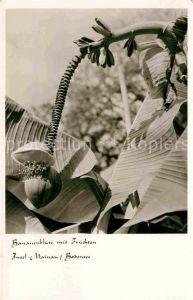 AK / Ansichtskarte Bananen Bananenblueten mit Fruechten Insel Mainau Bodensee  Kat. Pflanzen
