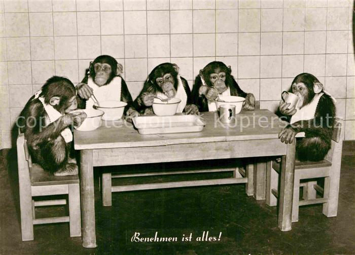 AK / Ansichtskarte Affen Mahlzeit Benehmen  Kat. Tiere