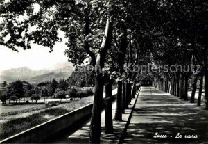 AK / Ansichtskarte Lucca Le mura Stadtwall Kat. Lucca