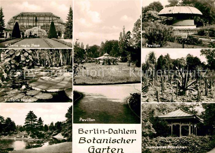 Seevorstadt-Dresden Victoria Regia In Blüte