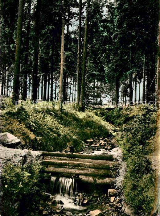AK / Ansichtskarte St Andreasberg Harz Rehberger Grabenhaus Waldpartie Kat. Sankt Andreasberg