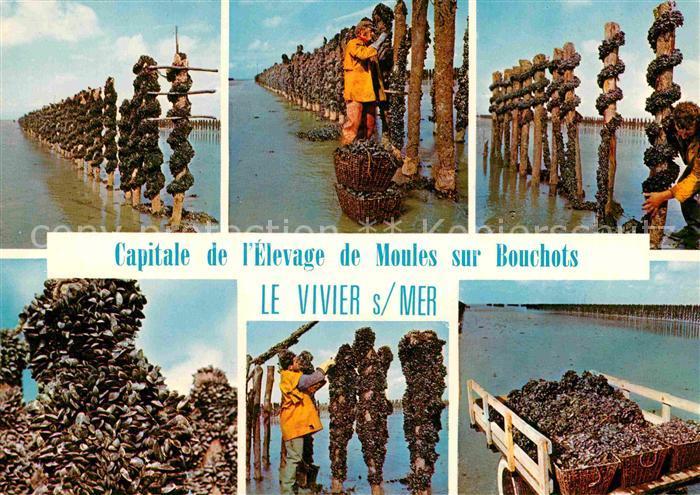 AK / Ansichtskarte Fischerei Elevage de Moules sur Bouchots Vivier sur Mer  Kat. Handwerk