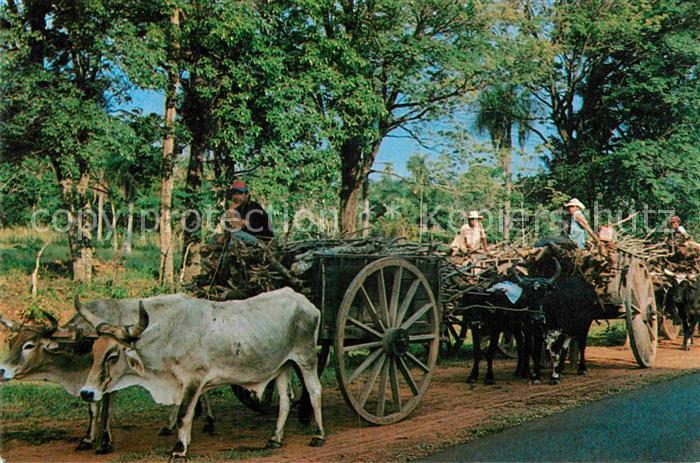 AK / Ansichtskarte Paraguay Carretas tipicas Transporte de lena Kat. Paraguay