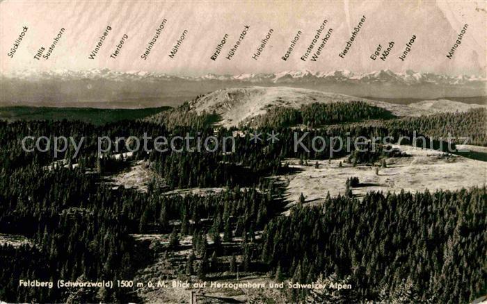 AK / Ansichtskarte Feldberg Schwarzwald Herzogenhorn Schweizer Alpen  Kat. Feldberg (Schwarzwald)