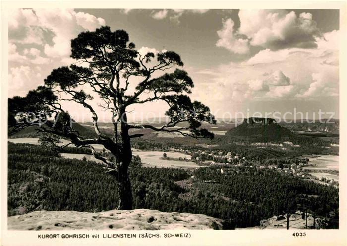 AK / Ansichtskarte Gohrisch Landschaftspanorama mit Lilienstein Tafelberg Saechsische Schweiz Kat. Gohrisch 0