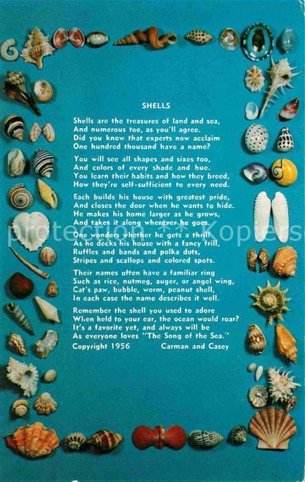 Ak Ansichtskarte Meerestiere Shells Muscheln Gedicht Carman And Casey Kat Tiere