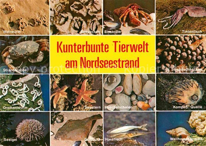 AK / Ansichtskarte Meerestiere Nordseestrand Wattwurm Kompass Qualle Hornfisch Wellhornschnecke Kat. Tiere