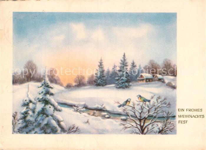 AK / Ansichtskarte Weihnachten Blaumeisen  Kat. Greetings