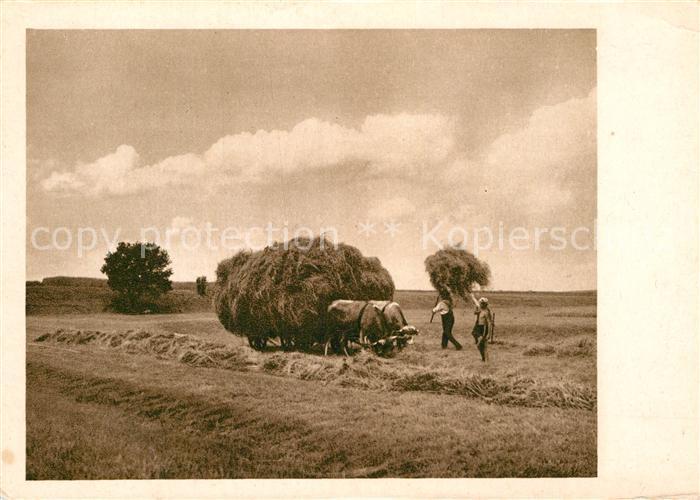 AK / Ansichtskarte Ernte Landwirtschaft Heuernte  Kat. Landwirtschaft