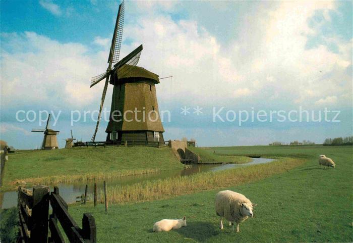 AK / Ansichtskarte Schermerhorn Muehlen Schafe Kat. Niederlande