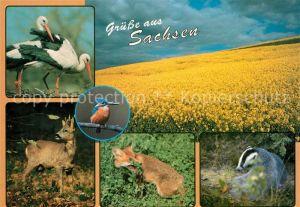 AK / Ansichtskarte Storch Weissstoerche Rapsfeld Eisvogel Rehbock Rotfuchs Dachs  Kat. Tiere